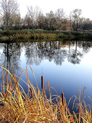 Nude trees in the mirror ... (mujepa) Tags: autumn trees reflection automne reeds mirror pond arbres miroir rushes reflets roseaux canas tang joncs giunchi scilfe