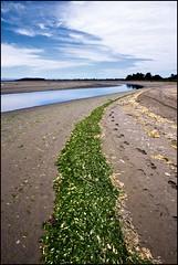 Sludge beautiful sludge (bkiwik) Tags: blue newzealand christchurch sky seaweed reflection beach digital canon sand footprints canterbury reflect nz southisland aotearoa sludge 2009 southshore newbrighton leadinglines av