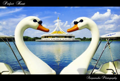 Perfect Heart /  ( .9) (AmpamukA) Tags: travel sky white lake relax hall duck perfect heart bangkok pair 9 thai both rama fit luang  suan appropriate 9        earthasia ampamuka   ratchamongkol