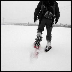 dana hilliot - l'expédition polaire