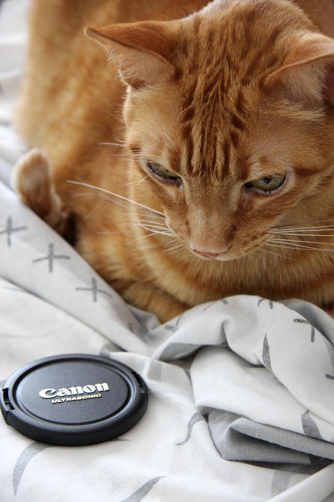 Canon?...