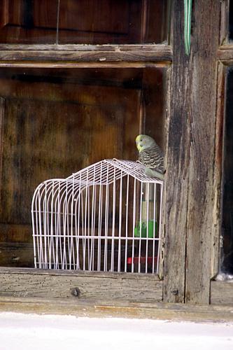 xativa-bird
