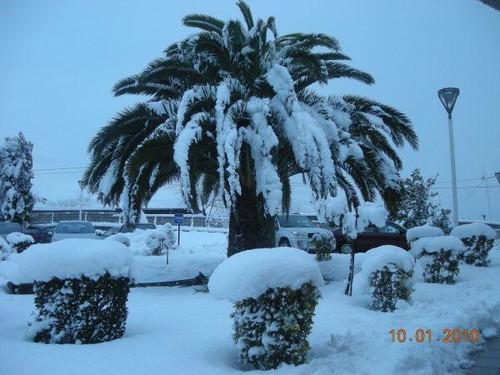 Nevada en Oviedo