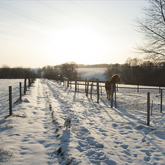 horse breath and a mad dog (moggierocket) Tags: trees winter horse dog white snow cold tree rural fence landscape fun running vista behind longshadows thelittledoglaughed breathcloud