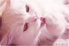 ToTo .... d = (Al HaNa Al Junaidel •• =)) Tags: cute cat al hana شمس toto tote نهار alhana قطه الهناء دلوعتي توتو توتي قطوتي هناء