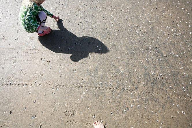Shores2