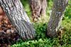 90. (Cody Guilfoyle) Tags: park tree dof bokeh sleepy stump idk iffy focsu