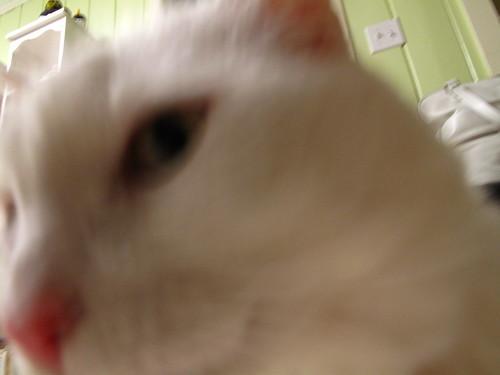 Nilla sniffs my camera.