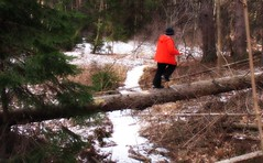 Winter Crossing (blmiers2) Tags: winter newyork nature geotagged log crossing blm18 blmiers2