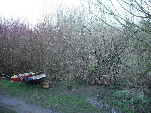 Artificial hedge.