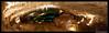 Les grottes de Choranche (franchab) Tags: wwwfranchabphotographefr grotteschoranchevercoreosnumeriqueforum5dmarkiicanon