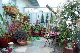 Container Garden 2010