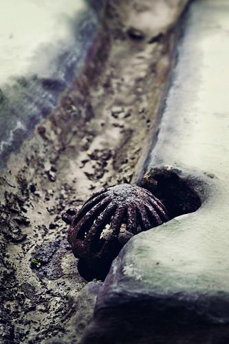Beauty in a drain gutter