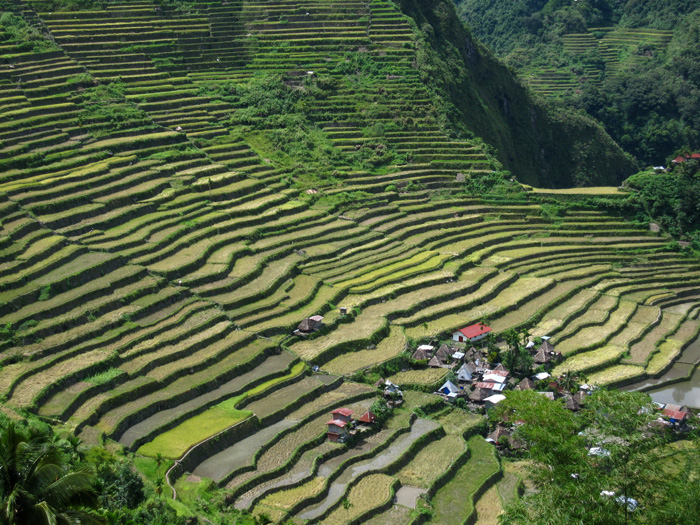 Terraces of rice at Batad, Philippines