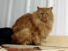 Flynn - 6 year old neutered male