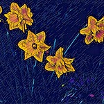 Daffodils, as seen through Prisma and Vinci filters. (Slideshow) thumbnail
