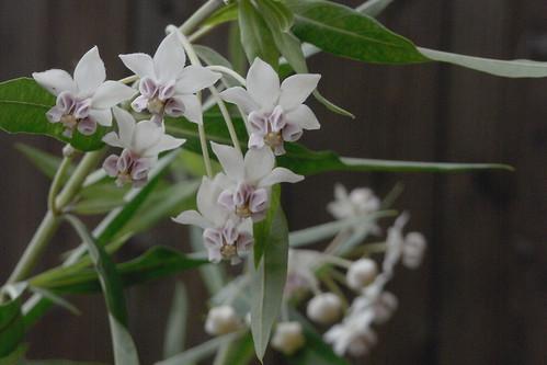 Flower-076