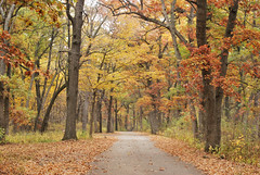Ellen (oacphoto2) Tags: autumn photochallenge oacphotoclub