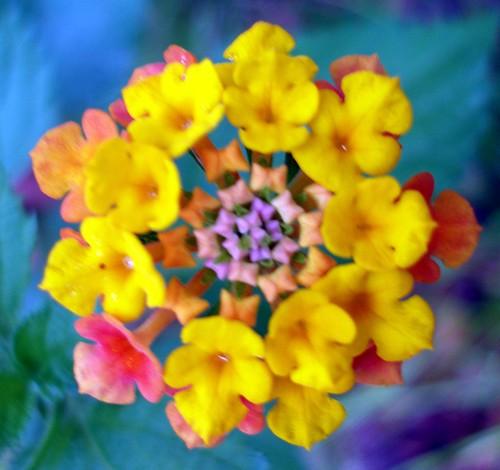 http://farm3.static.flickr.com/2799/4087862429_9f7d1cafb6.jpg