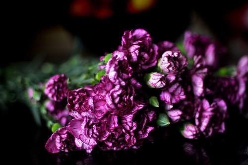 091026flowers