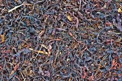 seaweed -- original