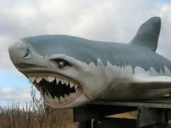 Hot Sam's Shark (altfelix11) Tags: broken minnesota shark landshark lakeville interstate35 hotsamsantiques