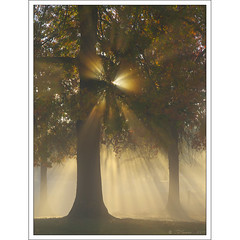 Foggy Mornings (Tony Immoos) Tags: california morning trees sunlight sunshine fog sunrise landscape olympus explore sunburst sacramento e3 magical sacramentocounty 1000views californialandscape zd effieyeaw 1260mm olympuse3