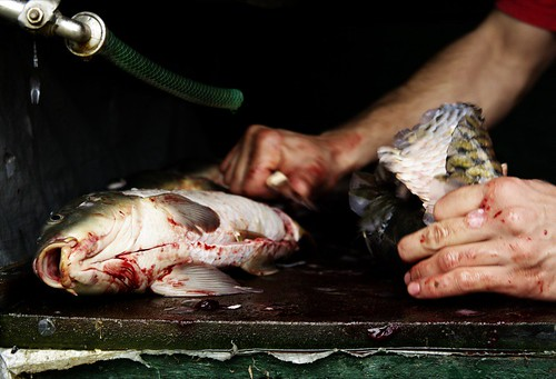 Carolin Weinkopf, Macedonia, really fresh fish, photography
