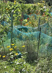 fall fences at the community plots