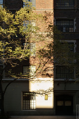 New York Sunshine (wmliu) Tags: street nyc newyorkcity usa ny building tree sunshine vertical us manhattan sliver canonef2470mmf28lusm wmliu enfuse canon5dmarkii 27thstreetnear5thave