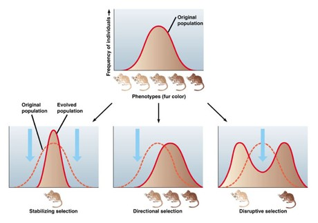 Directional Selection Only Occurs In Response To Naturally Occurring Events