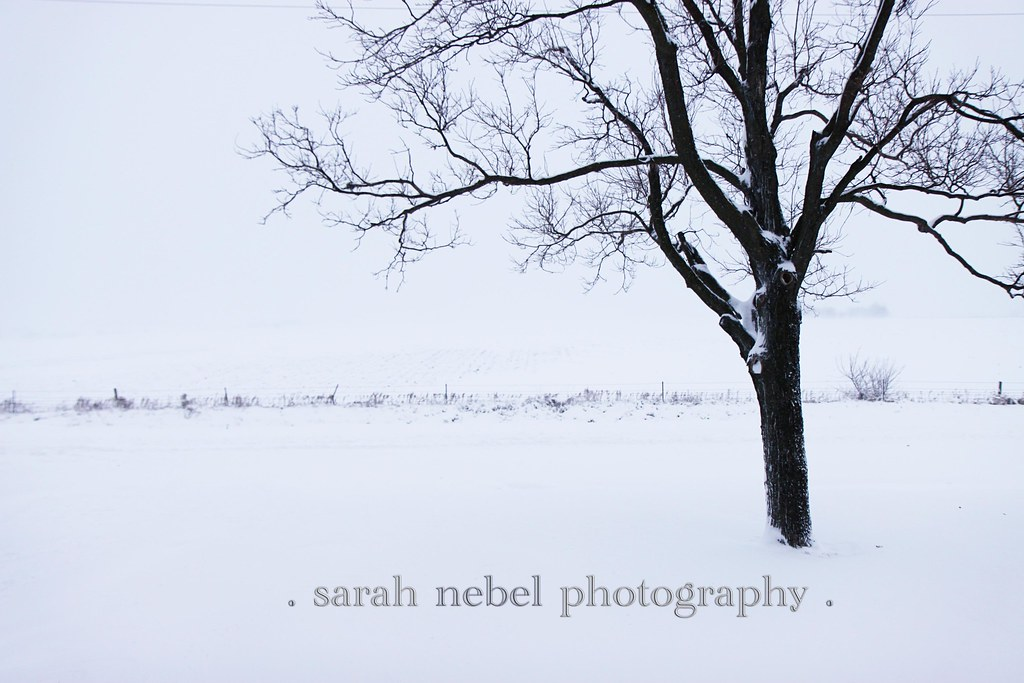 . snow day .