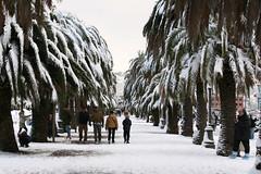 Passeggiata Morin (Marco_Traverso) Tags: sea white snow mare neve lungomare garibaldi 2009 palme giardini laspezia morin spezia neve2009 neveaspezia