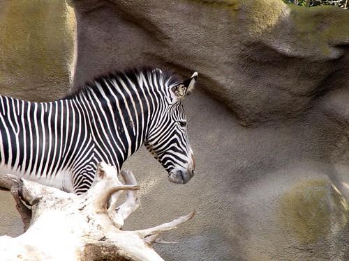 San Diego Zoo-4