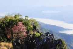 Pha Tang, Chiang Rai, Thailand (Nobythai) Tags: morning sky tree green nature forest river landscape thailand eos asia southeastasia image thai  sakura 5d mekong dryseason chaingrai supershot  anawesomeshot unseenasia earthasia naturallyartificial phatang totallythailand  impensable flickraward