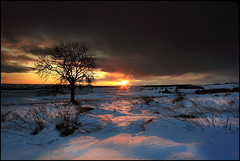 Lock-down (angus clyne) Tags: sunset wild snow storm cold tree clouds shower scotland heather perthshire windy ashtree moor windfarm drift blairgowrie flikcr lockdown drimmie leefilters colorphotoaward