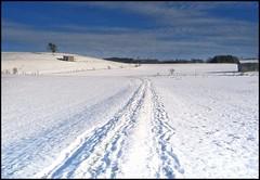 Allgaeu 2010 Januar Schnee 2