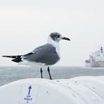 Bolivar Ferry, Galveston, Texas 0116101655 thumbnail