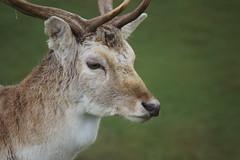 DSC00443 (Sarah Bailey) Tags: park dyrham 170110