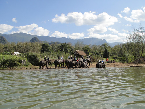Elephants Sanctuary in Luang Prabang