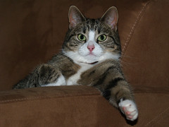 Where's me beer? (Jan Gee) Tags: cats cat chats kat feline chat kitty gato katze gatto katzen kot