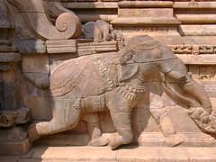 An elephant in Darasuram