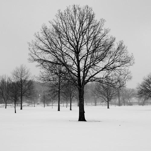 99 / 365: City Park