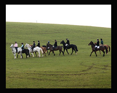 Dungarvan Famers Hunt (hurleypatricia33. Thank you for your comments) Tags: horses dogs hurley hunt tatie