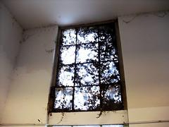 Fensterbild, Frankfurt/Main 2010 (Spiegelneuronen) Tags: frankfurtmain rundgang stdel stdelschule