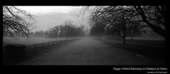 Foggy Oxford Morning or Dumper at Dawn (fuzz'ed) Tags: morning christchurch fog delta oxford fields delta3200 3200 xpan selfdeveloped ddx ilfotecddx ilfotec christchurchfields