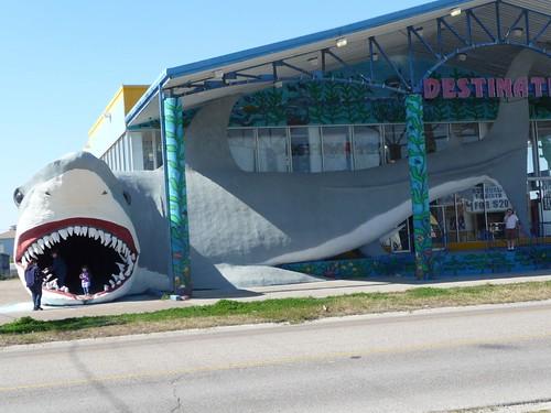 big ass shark.