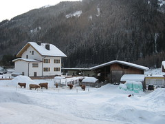 View from our chalet (after dump) (le_sloth) Tags: winter snow austria cattle highland snowboard stanton 2010 nasserein