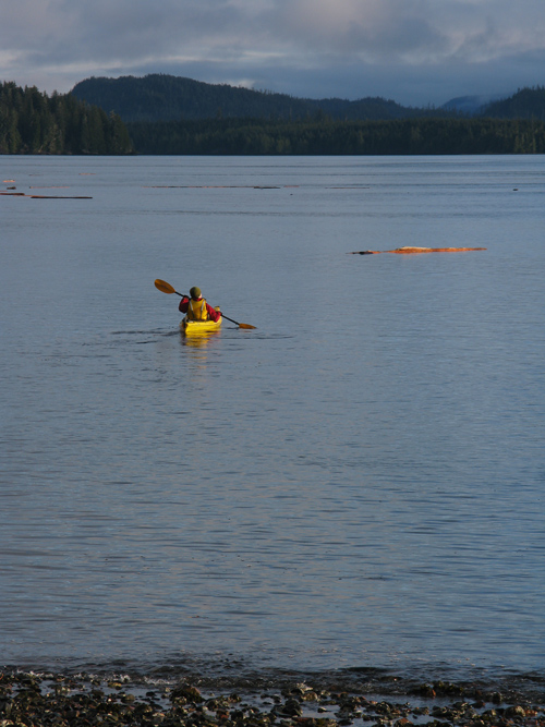 a yellow canoe and logs in Kasaan Bay, Alaska