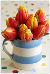 first month of Spring (C.Mariani) Tags: flowers home kitchen season table march tulips interior seasonal fresh bunch pitcher hause mycreation
